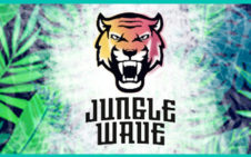 Jungle Wave Concentrates FR/MAL 10 ml